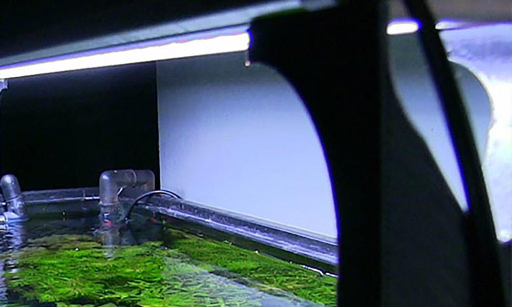 Finnex Light Risers by Elevate Shrimp