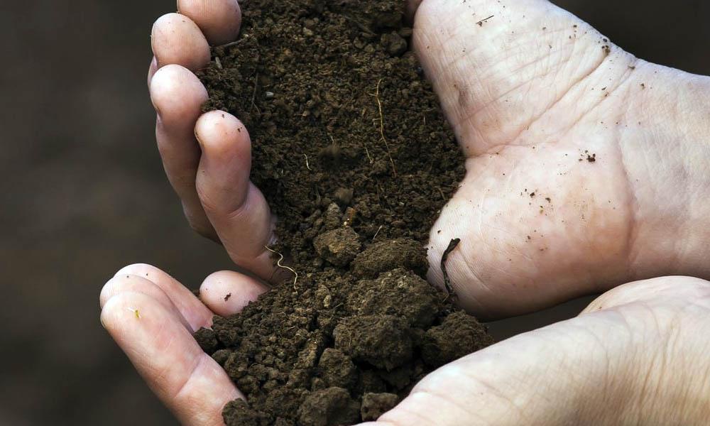Soil Substrate Aquarium Setup Guide