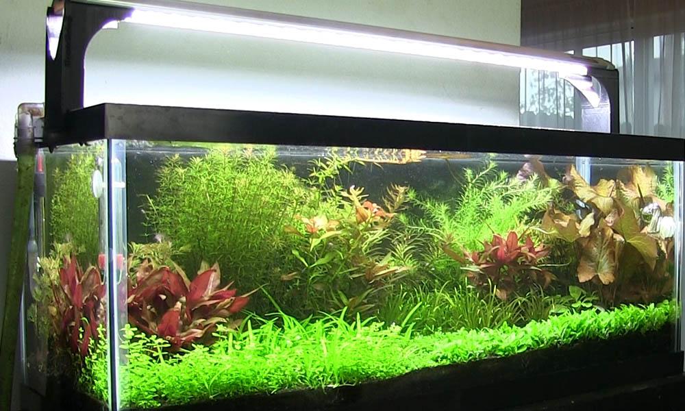 Planted Aquarium Lighting Guide